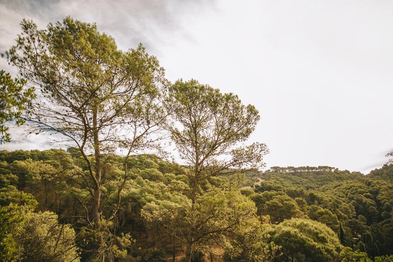קהילה מטיילת: נתניה והסביבה